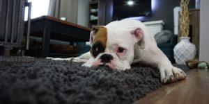 Como tirar mancha do carpete